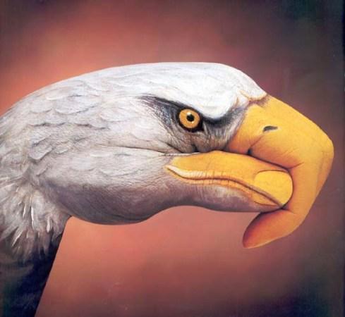 белоголовый орлан фото