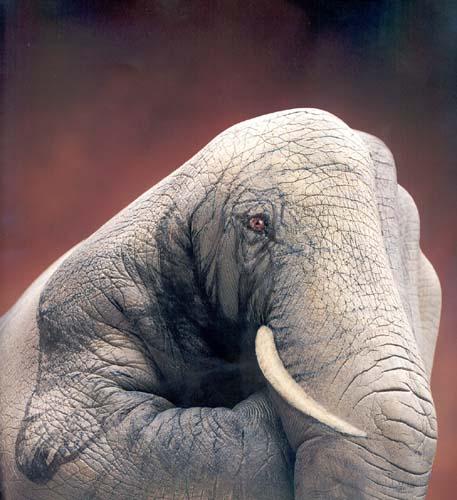 Слон Фото Боди Арт