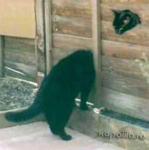 кошка с длинной шеей
